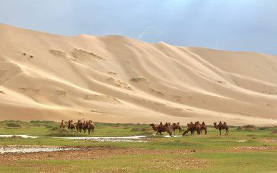 ホンゴルゴビ砂丘